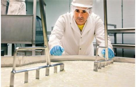 Rafael Chavez, director of Fresk-O, looks over vats where his cheese is being made. Photo by Jason Franson, Edmonton Journal.