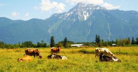 The Farm House Natural Cheeses of Agassiz, British Columbia, in quite possibly the prettiest setting for a chesse dairy in Canada, was named Grand Prix champion in tw0 categories.